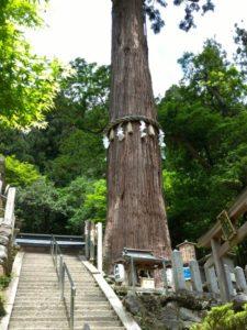 大杉のご神木